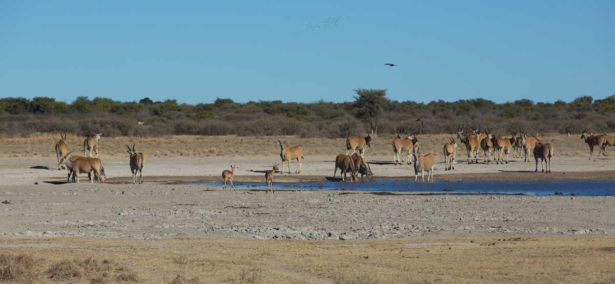 Botswana_028