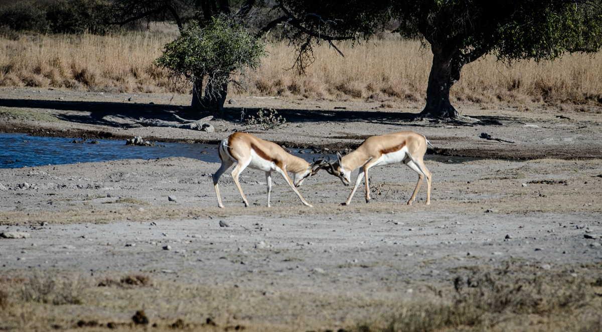 Botswana_037