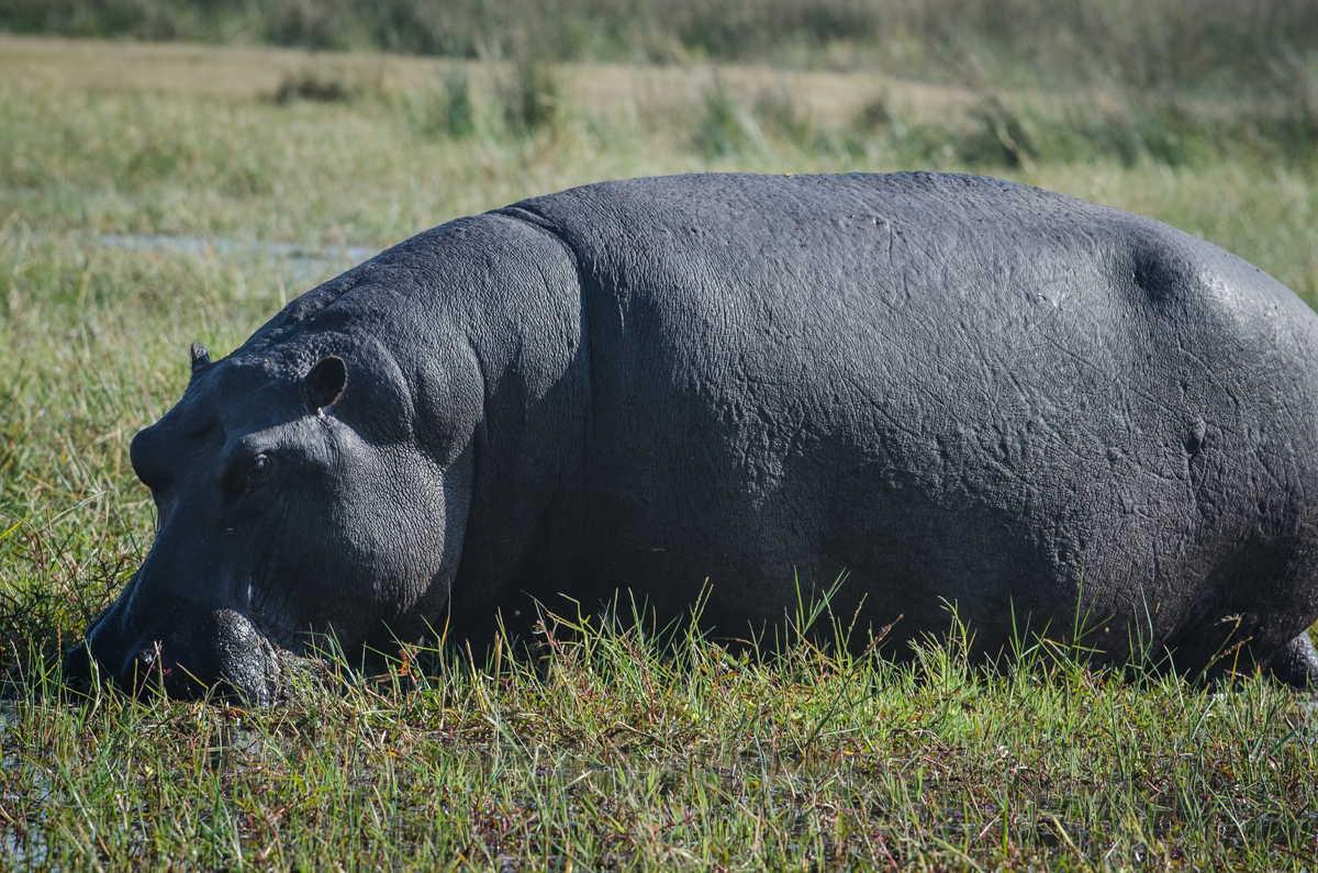 Botswana_046