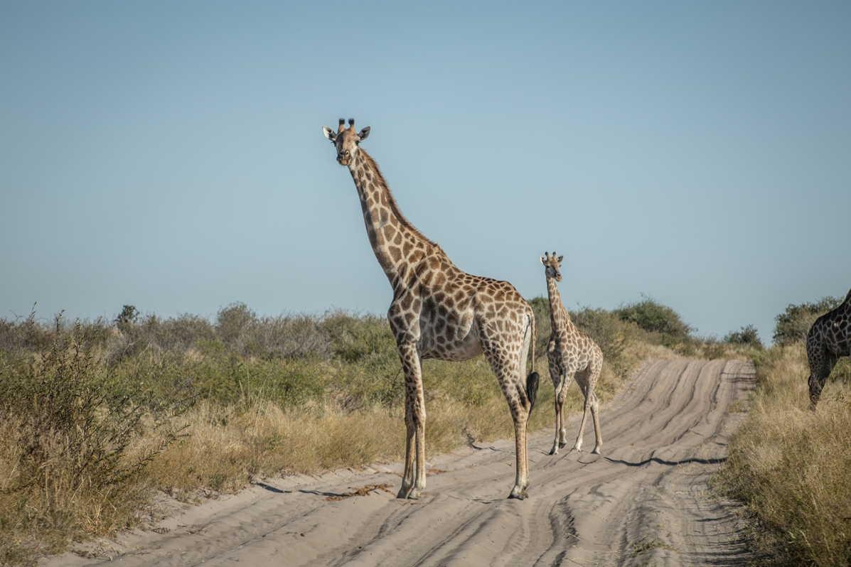 Botswana_061