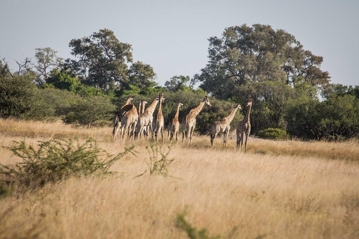 Botswana_063