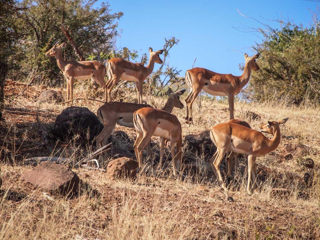 Botswana_081