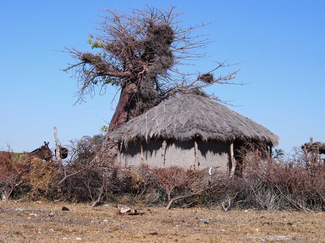 Botswana_089