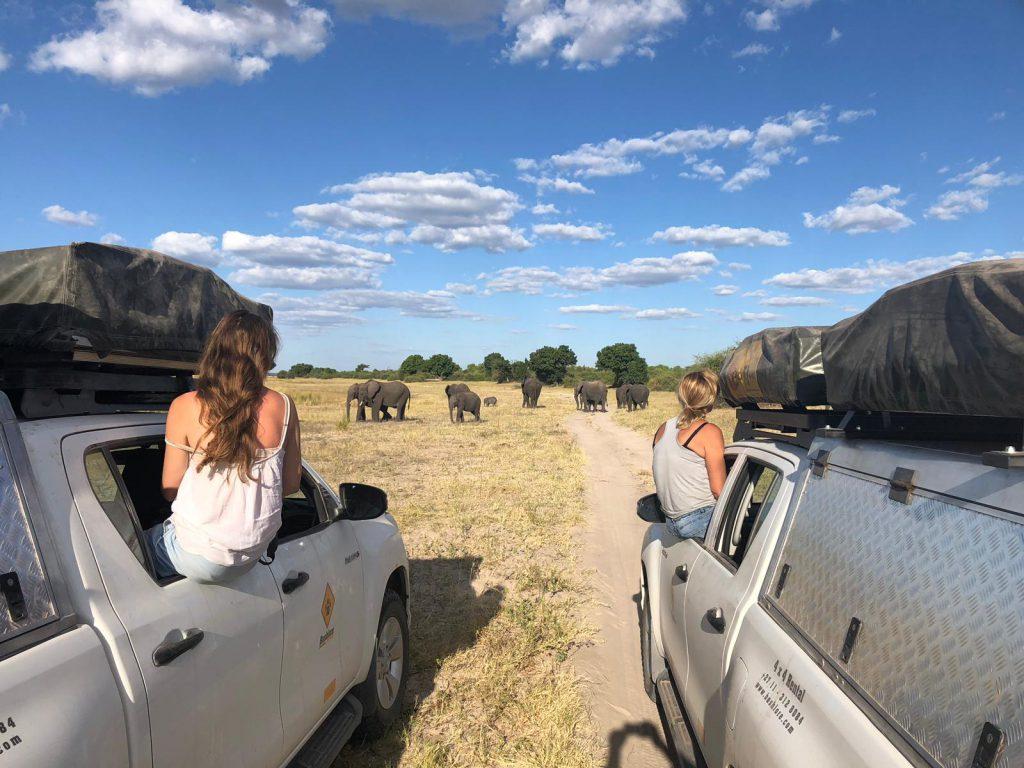 Botswana – safari